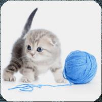 Лучшие готовые решения для создания сайта о животных – топ-10 шаблонов для WP