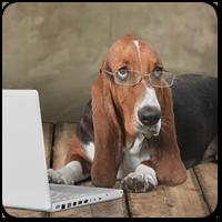 9 советов и подсказок при выборе новой темы оформления WordPress