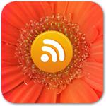 Вставка RSS-ленты в любую часть вашей WordPress-темы